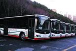 辽宁:大连市内184条公交线2017年全部用上绿色公交